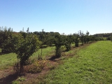 Apple Picking at Dame Farm and Orchard – Johnston, RI
