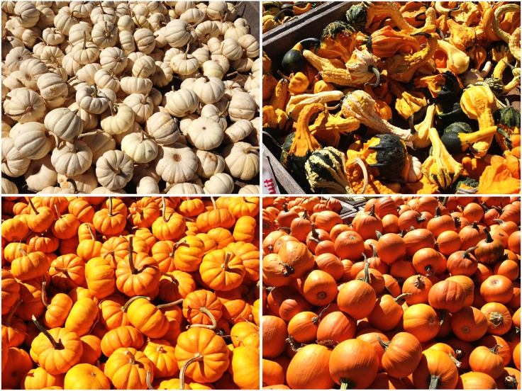 Gourds from Dame Farm Orchard