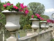 Jardin du Luxembourg - Flowers