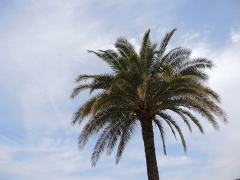 Jardin du Luxembourg - Palm Tree