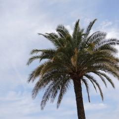Jardin du Luxembourg - Palm Tree