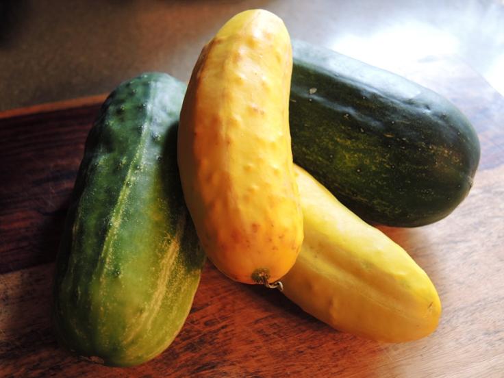 Man Fuel - Food Blog - Pickling Cucumbers