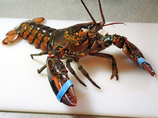 Man Fuel Food Blog - Live Lobster