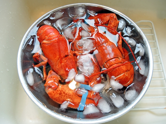 Man Fuel Food Blog - Lobsters in Ice Bath